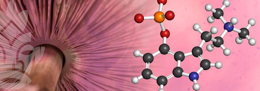 Chemische bestandsdeel Psilocybine