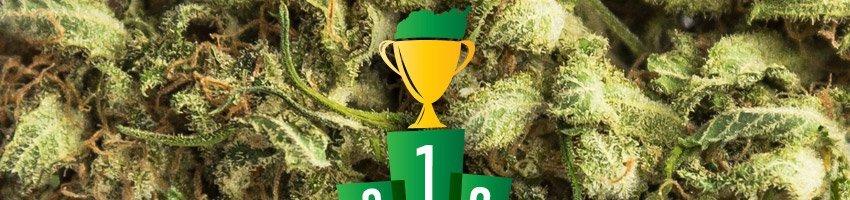 Kush Cup Winnaar