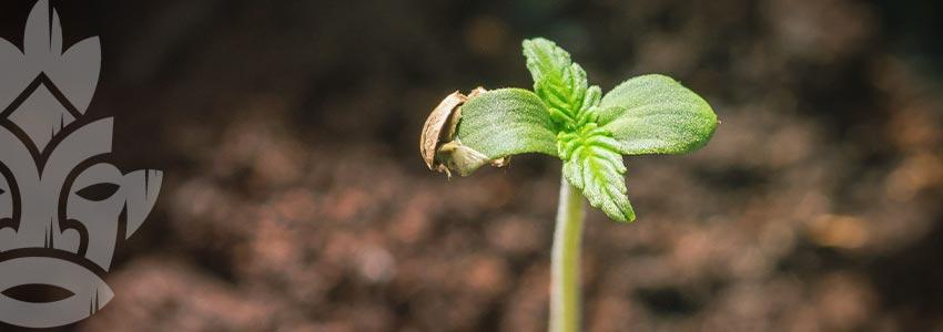 Voor Jonge Planten Zorgen
