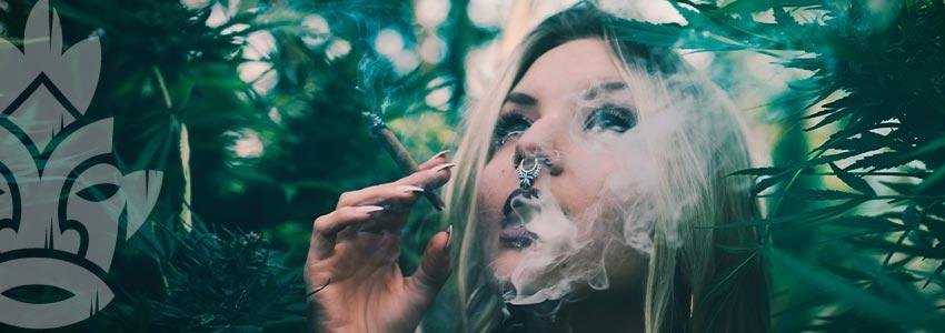 Waarom Zou Je Thc-arme Wiet Roken?