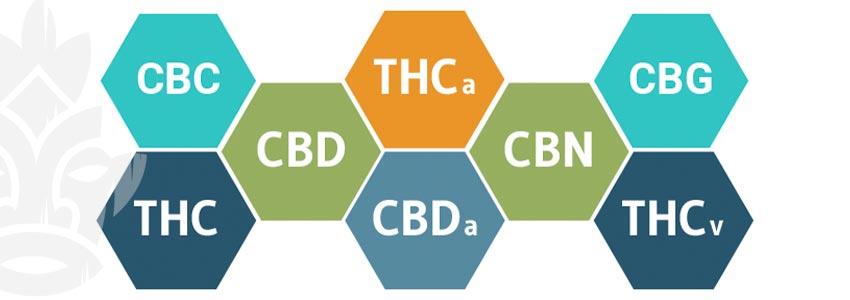 Hoe Werkt Cbd?