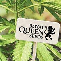 Bekijk de complete catalogus van Royal Queen Seeds