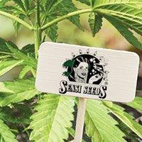 Bekijk de complete catalogus van Sensi Seeds