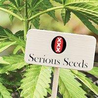 Bekijk de complete catalogus van Serious Seeds