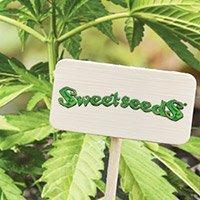 Bekijk de complete catalogus van Sweet Seeds