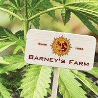 Bekijk de complete catalogus van Barney's Farm