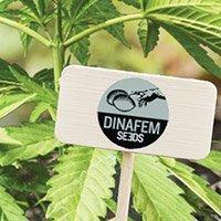 Bekijk de complete catalogus van Dinafem