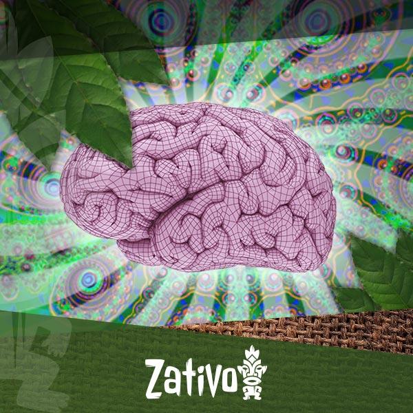 Hoe Beïnvloedt Ayahuasca Je Hersenen Zativo