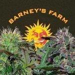 2 Nieuwe Soorten van Barney's Farm: Bad Azz Kush en Ayahuasca Purple