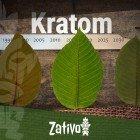 De Geschiedenis van Kratom