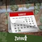 Hoe Je 6-7 Keer Per Jaar Cannabis Kunt Oogsten