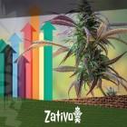 8 Tips Voor Een Maximale Cannabis Oogst