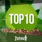 Top 10 Cannabis Zadenbanken