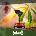 Verbeter De Gezondheid Van Je Cannabisplanten Met Melasse