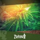 Ontdek Hier De 5 Beste THC-Arme Cannabis Strains