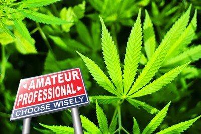 De Top 10 beginnersfouten bij het kweken van cannabis