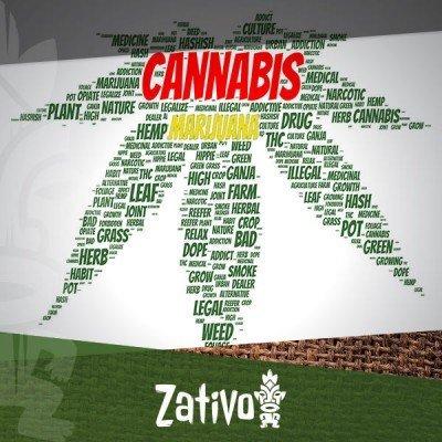 Waarom wordt cannabis ook wel marijuana genoemd?