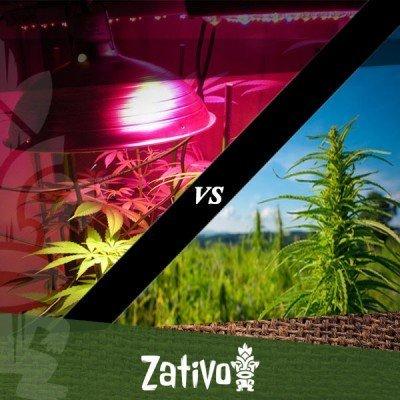 Cannabis binnenshuis vs buitenshuis kweken: de belangrijkste verschillen