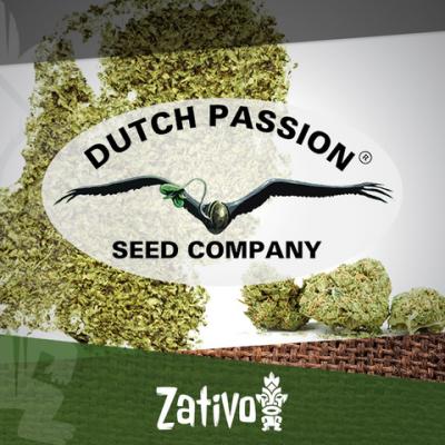 Introductie: 7 nieuwe Dutch Passion soorten