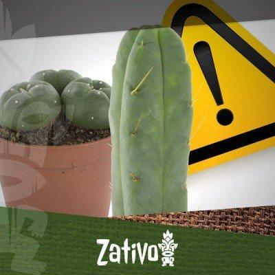 Mescaline Cactussen - Een waarschuwing