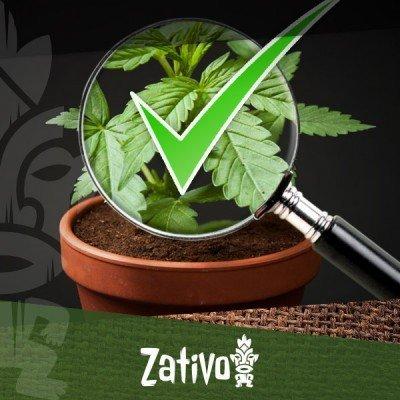 8 tips voor het herkennen van goede cannabis