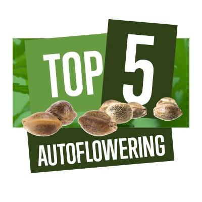 Top 5 Autoflowering Cannabis Soorten Voor 2018