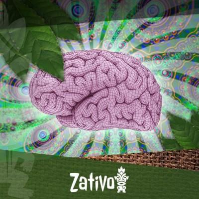 Hoe Beïnvloedt Ayahuasca Je Hersenen?