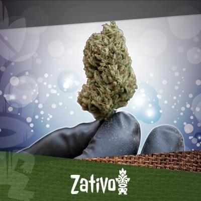 De Beste Manieren Om Cannabis Te Drogen En Te Curen