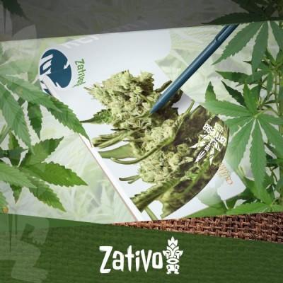 Kweekverslag: New-School Zamnesia En Royal Queen Seeds Cannabis Strains
