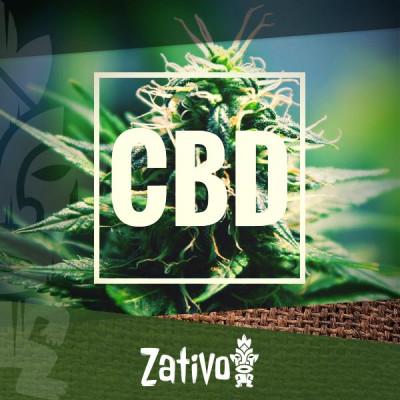 De beste strains met een hoog CBD-gehalte