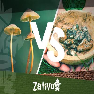 De verschillen tussen psychedelische paddo's en truffles