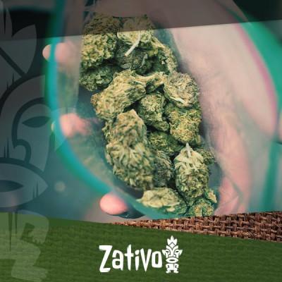 Kweek superieure wiet met mannelijke cannabisplanten