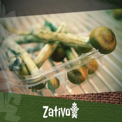 De beste manieren om magic mushrooms of truffles te bewaren