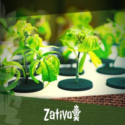 Hydrocultuur Voor Biologische Cannabis: Is Het Mogelijk?